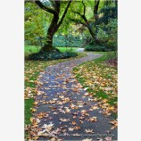 Autumn Park 2 Stock Image, Lithia Park, Ashland, Oregon