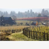 Fall Vineyards Stock Image Southern Oregon