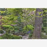 Japanese Garden In Spring II Stock Image Lithia Park, Ashland, Oregon