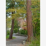 Lithia Park Path Stock Image Ashland, Oregon