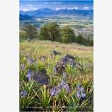 Wildflowers on Roxy Ann Butte Stock Image Medford, Oregon