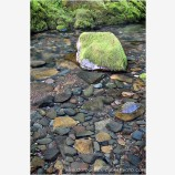 Wilson Creek Stock Image, North Umpqua River, Oregon