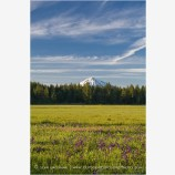 Mt. McLoughlin across Howard Prairie 2 Stock Image Ashland, Oregon