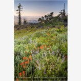 Soda Mountain Wildflowers Stock Image Ashland, Oregon