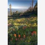 Soda Mountain Wildflowers 2 Stock Image Ashland, Oregon