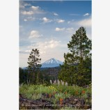 Mt. McLoughlin  with Wildflowers Stock Image Ashland, Oregon