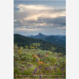 Soda Mountain Wildflowers 5 Stock Image Ashland, Oregon