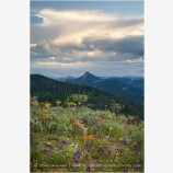 Soda Mountain Wildflowers 6 Stock Image Ashland, Oregon