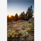 Summer Alpine Flowers on Mt. Ashland Stock Image Ashland, Oregon
