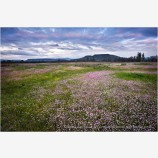 Table Rocks overlooking Wildflower field Stock Image Medford, Oregon