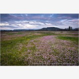 Table Rocks overlooking Wildflower field 2 Stock Image Medford, Oregon