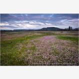 Table Rocks overlooking Wildflower field 2 Stock Image Medford, Oregon