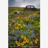 Abandoned Car Stock Image Dalles Mountain Ranch, Columbia Gorge, Washington
