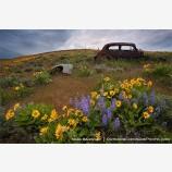 Abandoned Car 2 Stock Image Dalles Mountain Ranch, Columbia Gorge, Washington