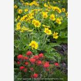 Rowena Wildflowers Stock Image Columbia Gorge, Oregon