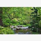 Japanese Garden in Spring 5 Stock Image Ashland, Oregon