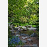 Japanese Garden in Spring 6 Stock Image Ashland, Oregon