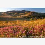 Grizzly Peak Wildflowers Stock Image Ashland, Oregon