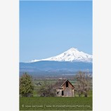 Mt. Jefferson overlooking Farm Stock Image Central Oregon