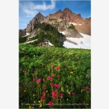 Three Fingered Jack 3 Stock Image Mt. Jefferson Wilderness, Oregon