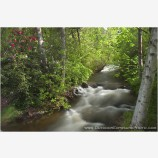 Ashland Creek In Spring I Stock Image, Lithia Park, Ashland, Oregon