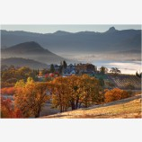 Rogue Valley Vineyards in Fall Stock Image Southern Oregon