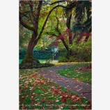 Lithia Park in Fall Stock Image Ashland, Oregon