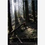 Coastal Forest Stock Image Oregon
