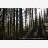 Coastal Forest 2 Stock Image Oregon