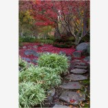 Japanese Garden Fall 10 Stock Image, Lithia Park, Ashland, Oregon