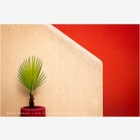 New Palm And Wall Stock Image, Mexico
