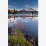 Sparks Lake Columbine Stock Image, Bend, Oregon
