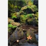 Emerald Pool Stock Image, Watson Creek, Oregon
