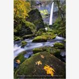 Autumn At Elowah Stock Image, Columbia Gorge, Washington