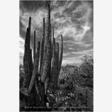 Sky Cactus Stock Image, Baja, Mexico