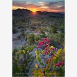 Trinchera Sunset Stock Image, Baja, Mexico