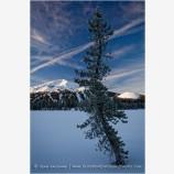 Mt. Bachelor And Tree Stock Image, Bend, Oregon