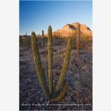 Baja Desert 1 Stock Image, Baja, Mexico