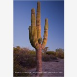 Baja Cactus Stock Image, Baja, Mexico