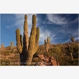 Baja Desert 3 Stock Image, Baja, Mexico