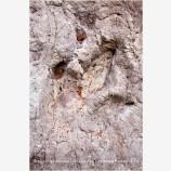 Dinosaur Tracks 1 Stock Image, Utah