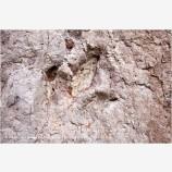 Dinosaur Tracks 2 Stock Image, Utah