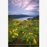 Columbia Wildflowers 3 Stock Image, Oregon