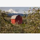 Hood River Valley Barn 3 Stock Image, Oregon
