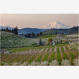 Hood River Valley Farmland 3 Stock Image, Oregon