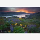 Columbia Wildflowers 2 Stock Image, Columbia River, Oregon