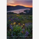 Columbia Wildflowers 1 Stock Image, Columbia River, Oregon