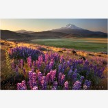 Search For Spring Stock Image, Mt. Shasta, California