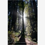 Redwood Grove 1, California
