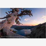 Crater Lake Rim Tree 1, Oregon